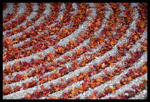 Autumn Zen Garden in Japan by AndrewMarston