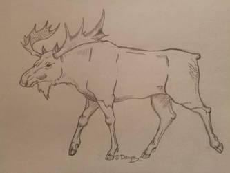 Moose by Darcyon