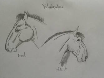 Kladruber horse by Darcyon