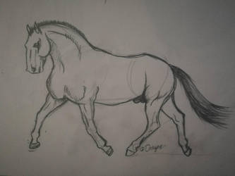 Pre Stallion by Darcyon