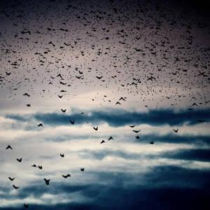 The day of raining birds.. by tuminka