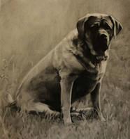 Old dog by Isadorrah