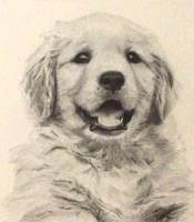 Golden retriever puppy by Isadorrah