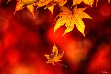 Fall Protection by UrbanRural-Photo