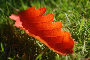 Leaf . by holmo