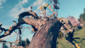 Plant Life 46# by Emthedragoneye