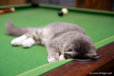 Pool Kitty by chrisgin