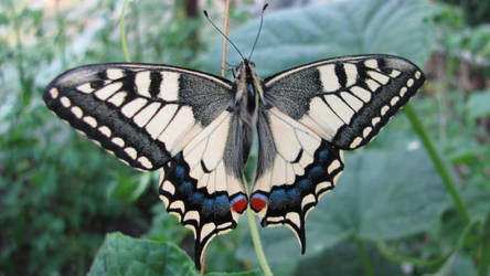 Fluture by tztz