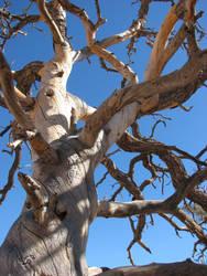 Desert Tree by dove-51