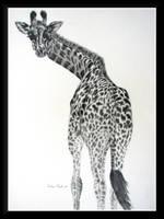 Giraffe by dove-51