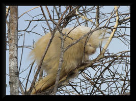 Sleeping Porcupine by dove-51
