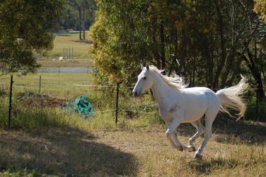 Horse stock - Arab gallop 2 by Chunga-Stock