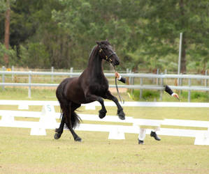 FR Big leap rear canter by Chunga-Stock
