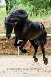 FR Leaping front on showjump by Chunga-Stock