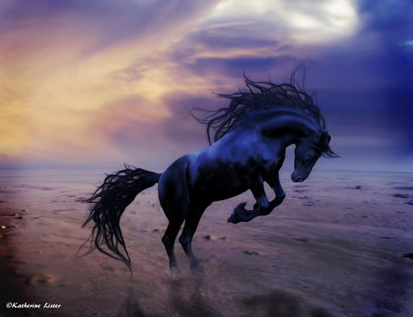 Wild Horse by pskate1