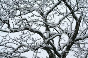 Snow, Snow, Snow by desmo100