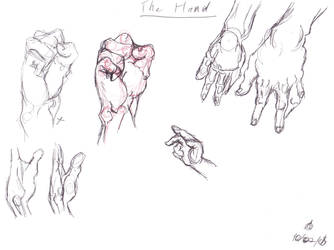 Anatomy Study-Hands by dream-chylde