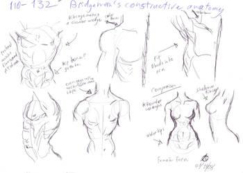 Anatomy Study-Torso by dream-chylde