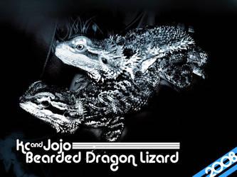 bearded dragon lizard 08 by sndo-ncg
