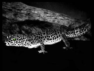 Gecko Kumar 2006 by sndo-ncg