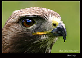 Hawk eye by Dean-Irvine