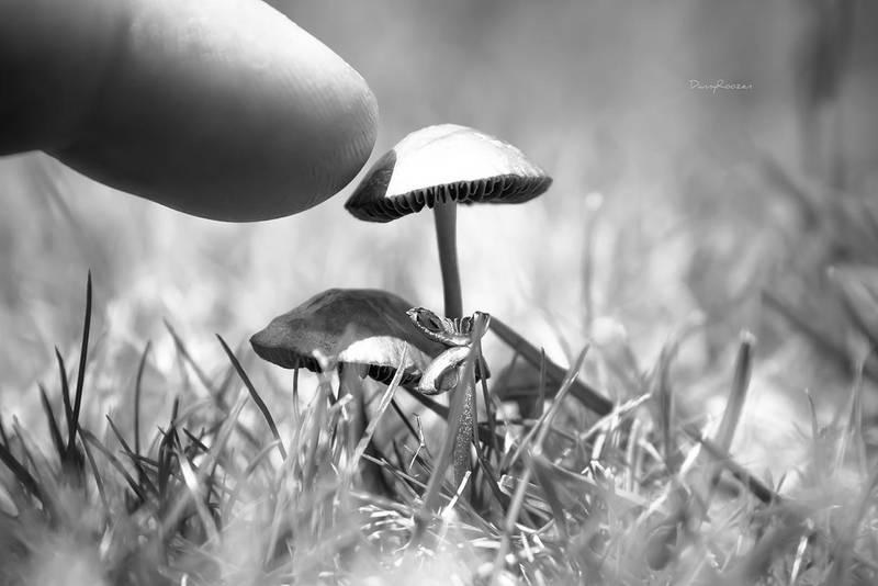 Tiny big world by DannyRoozen