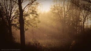 Mystical by DannyRoozen