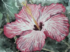 Hibiscus flower tropical art by derekmccrea