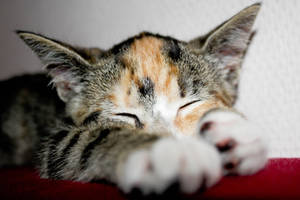 My Little cat :3 by LuckyTenshi
