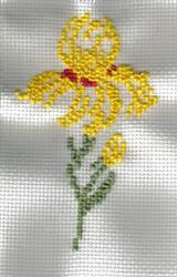 Yellow Iris by terrahachi