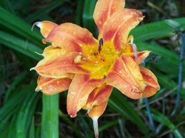 Orange flower with green leaves by caspercrafts