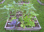 Square foot garden with Jerusalem Artichokes by caspercrafts