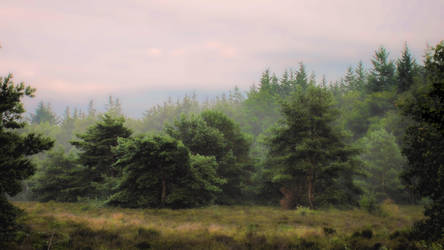 Mist in het bos op Groevenbeek. by Peenbuiker