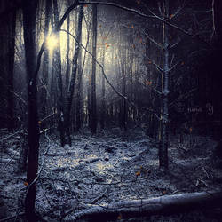 Sun Of The Sleepless by nina-Y