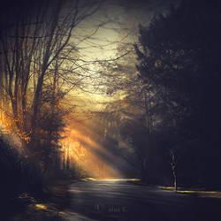 Shadowlands - Nature by nina-Y