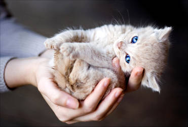 Hand full of cuteness by jennipenny