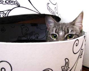 Much More Than A Box by KatCraig
