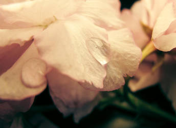 Flower Drop by KatCraig