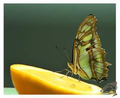Butterfly Breakfast by shell4art