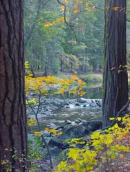 Yosemite Fall Colors by shell4art