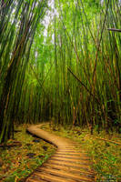 Bamboo Journey by AndrewShoemaker