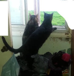 Two Cat, A Window And A Robin by SilvenWolf