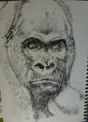 Gorilla!!!!! by hellobetty90