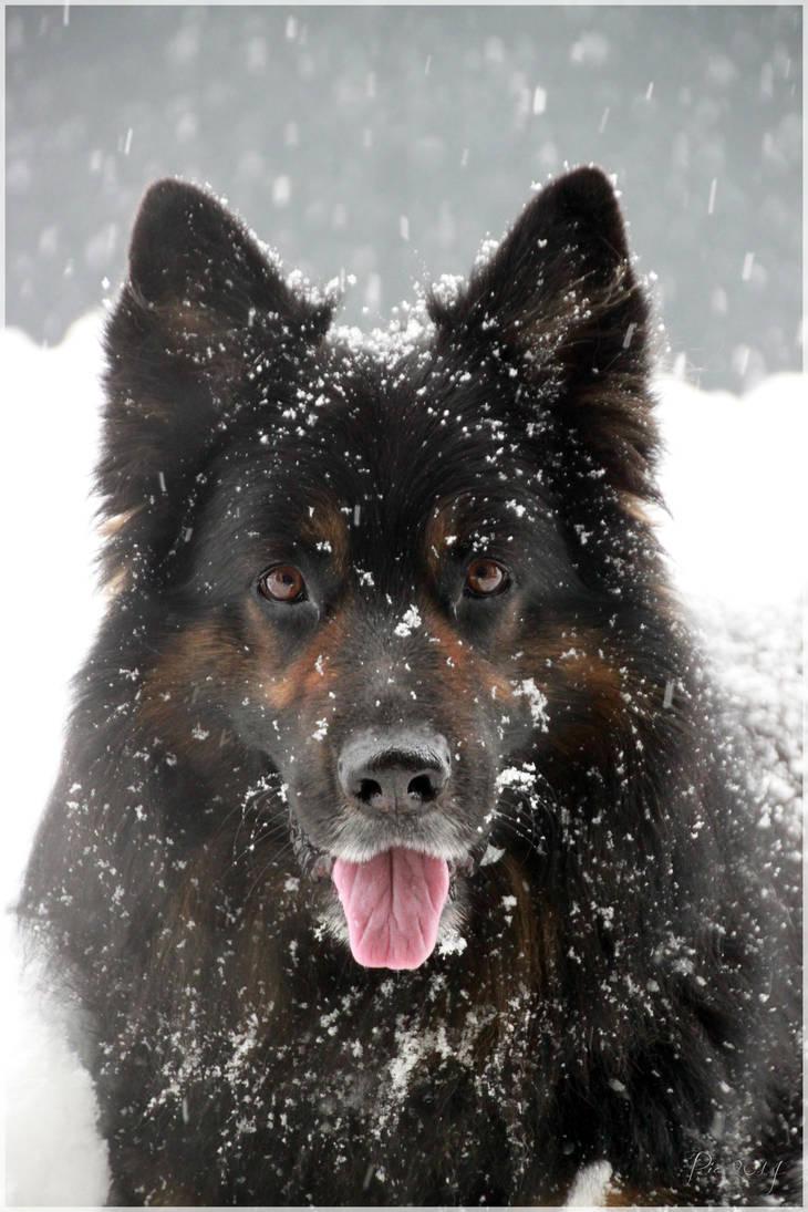 We love snow 4 by Shiranui