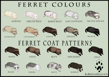 Ferret Colour and Coat Pattern Chart by WeaselWomanCreations