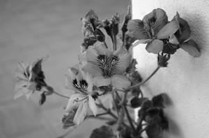 Flowers elegance by JohRo2012