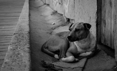Four-legged lonely soul by JohRo2012