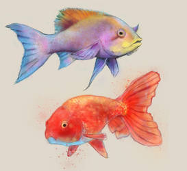 Fish Water Color Study by KenryChu