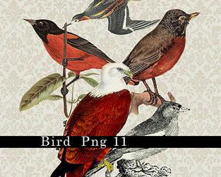 bird  png by b0412