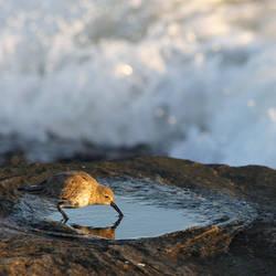 Sandpiper pool by TheBrassGlass
